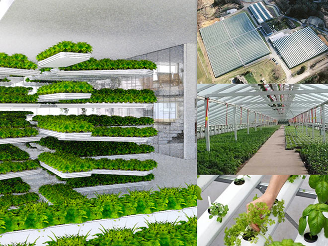 Urban-Agriculture